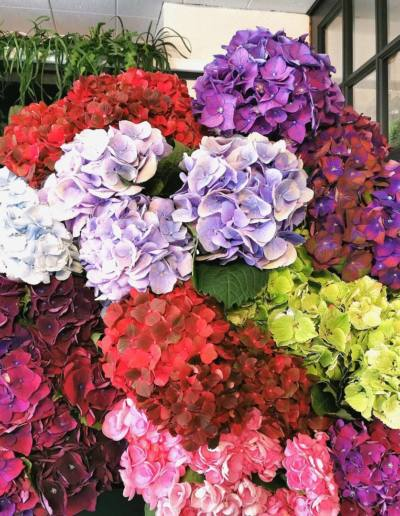 Fleuriste Guéret